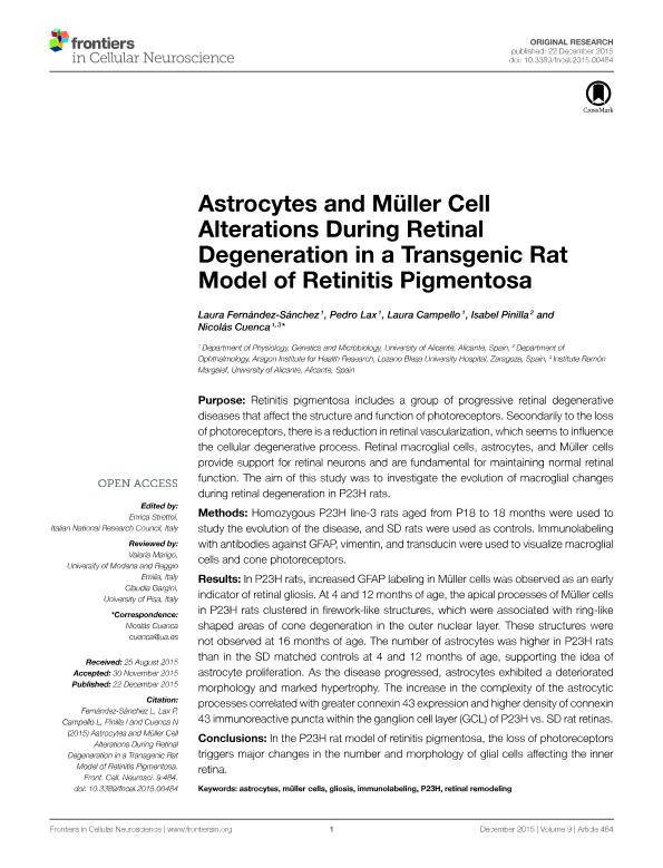 Astrocytes and Müller Cell Alterations During Retinal Degeneration in a Transgenic Rat Model of Retinitis Pigmentosa