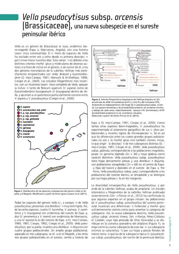 Vella pseudocytisus subsp. orcensis (Brassicaceae), una nueva subespecie en el sureste peninsular ibérico