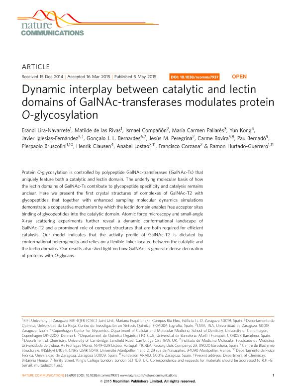 Dynamic interplay between catalytic and lectin domains of GalNAc-transferases modulates protein O-glycosylation