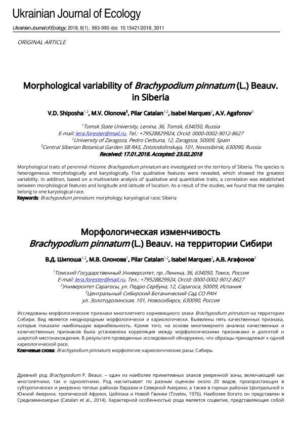 Morphological variability of Brachypodium pinnatum (L.) Beauv. in Siberia
